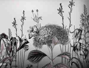 高清花朵笔刷