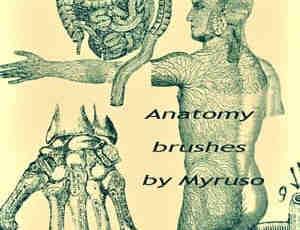 人体器官解剖图笔刷
