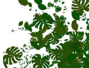 植物叶子笔刷
