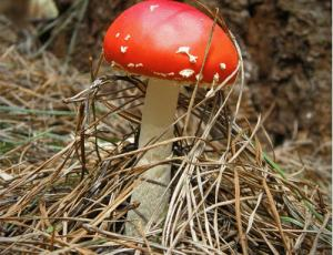 30张漂亮的野蘑菇微距摄影