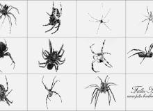 毒蜘蛛笔刷