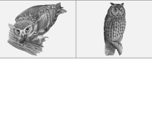 猫头鹰笔刷