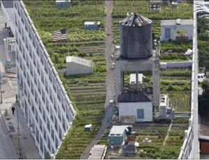 纽约屋顶的秘密花园