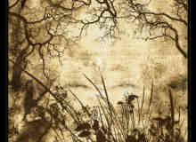 树枝枝叶植物笔刷