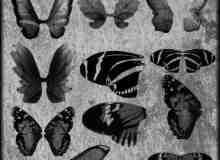 蝴蝶翅膀笔刷