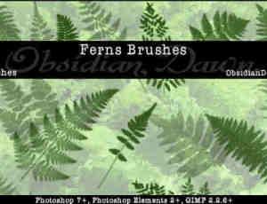 蕨类植物叶子笔刷