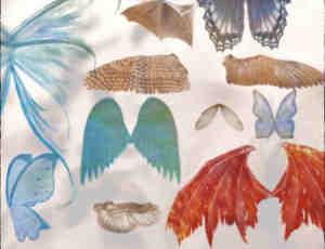 38种不同类型的翅膀笔刷套装