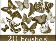 20种品种不一的蝴蝶笔刷