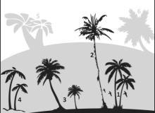 椰子树棕榈树笔刷