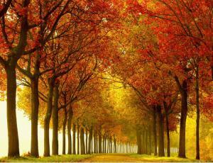 39张不可思议的自然摄影照片美景欣赏