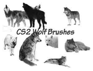 雪狼动物笔刷下载