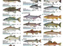 淡水鱼类笔刷套装