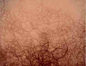 性感的人体毛发笔刷