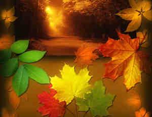 秋天的树叶枫叶笔刷