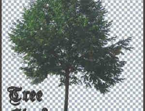 高分辨率树木PS笔刷素材下载