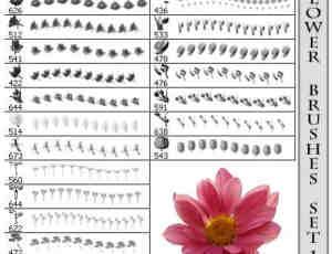 漂亮的真实鲜花花朵笔刷