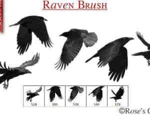 飞翔的老鹰、乌鸦鸟类PS笔刷下载