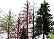 森林树木PS素材笔刷