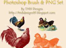 家禽大公鸡、母鸡、小鸡PS素材笔刷下载