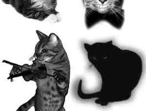 搞笑卖萌猫咪PS笔刷