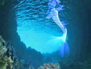 梦幻的美人鱼PS笔刷