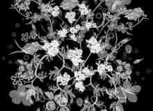 漂亮的花藤和花朵植物花纹PS笔刷