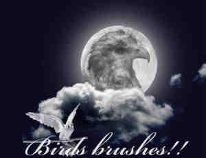 展翅的雄鹰、老鹰笔刷