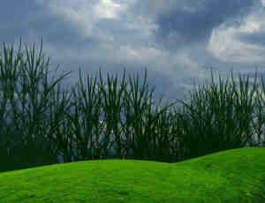 绿色草皮、青草草坪、草地PS笔刷