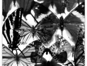 真实昆虫蝴蝶photoshop笔刷素材