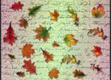 树叶、枫叶、落叶photoshop笔刷素材