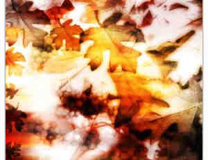枯黄、干枯的梧桐树叶photoshop笔刷素材
