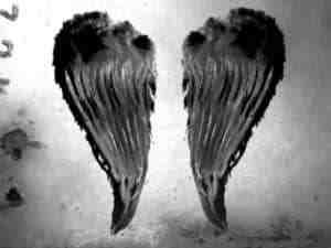 蝴蝶翅膀、天使翅膀、蜻蜓翅膀等photoshop笔刷素材下载