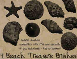 真实的海星、海螺等高清素材photoshop笔刷