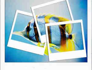 卡片式相片相框背景PS效果笔刷