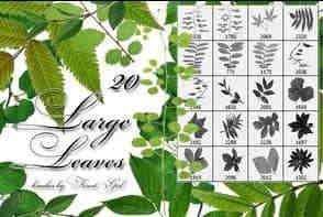 真实树叶、绿叶、松叶、蕨类植物叶子PS笔刷素材
