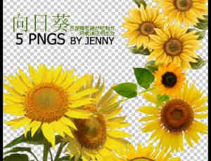 真实的向日葵花朵图片PS素材下载