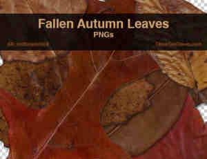 真实高清的树叶、枯叶、秋天落叶photoshop笔刷素材
