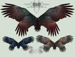 4对雄鹰羽翼翅膀美图秀秀png素材下载