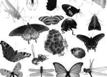 蝴蝶昆虫photoshop笔刷素材下载