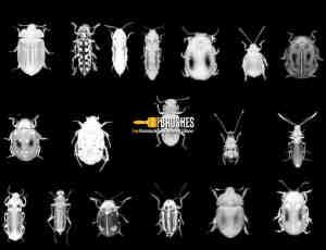 各种甲虫、昆虫photoshop笔刷下载