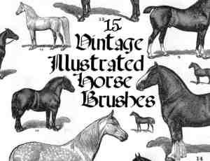 手绘动物马匹photoshop笔刷素材