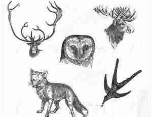 手绘猫头鹰、雄鹿头、狼、燕子图形图案Photoshop笔刷素材