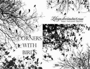 树枝与鸟ps树林背景笔刷下载