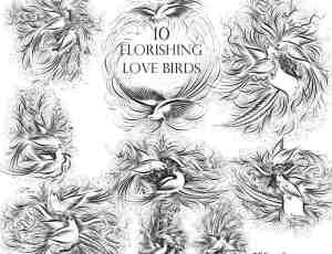 10种不同的艺术爱情鸟Photoshop笔刷素材