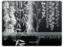 垂柳枝条Photoshop植物笔刷素材