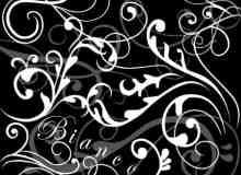 漂亮的植物花纹照片美图背景边框饰品PS笔刷 #.2