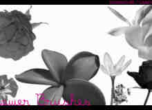 真实的鲜花、花朵图案Photoshop笔刷素材下载