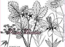 漂亮的植物花纹照片美图背景边框饰品PS笔刷 #.37