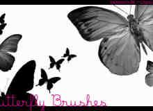 蝴蝶Photoshop昆虫笔刷