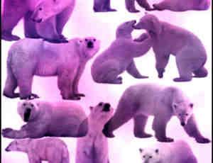 北极熊Photoshop笔刷素材